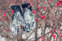 Pendure tudo nos mitenes da neve em uma colmeia com bagas vermelhas, a da rosa Foto de Stock