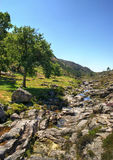 Peneda Geres国家公园 库存照片