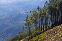 Peneda geres national park portugal royalty free stock photos