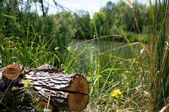 Penek mot bakgrunden, av vatten och växter arkivbilder