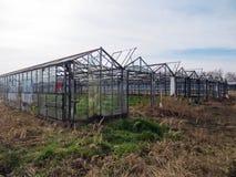 Penetración en cultivar un huerto abandonado Fotografía de archivo