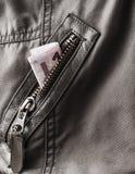 Pengar i facket Royaltyfria Bilder