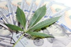 Pengar och marijuana Cannabisbladet ligger på bakgrunden av hundra dollarräkningar grunt djupfält Begreppet av royaltyfri foto
