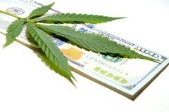 Pengar och marijuana Cannabisbladet ligger på hundra dollarräkning grunt djupfält Begreppet av droghandeln eller l arkivfoto