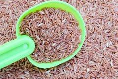 Pengar på skeden och röda ris Fotografering för Bildbyråer