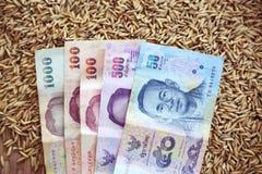 Pengar på suddigt av risfältjasminris royaltyfri bild