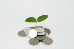 Pengar som växer royaltyfria bilder