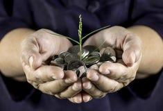 Pengar som växer på mynt därför att arbetsamhet med två händer Arkivbild