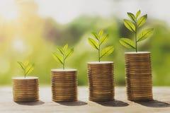 pengarbunt med växande moment för växt på mynt begreppsfinans Royaltyfria Bilder