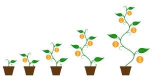 Pengarmyntväxt i växande process för blomkruka stock illustrationer