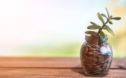 Pengarträd i en glass krus med mynt på en suddig bakgrund av naturen royaltyfri fotografi