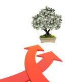 Pengarträd med dollarsedlar Arkivfoto