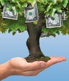 Pengarträd - en dollar Arkivfoton