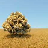 pengartree Arkivfoto