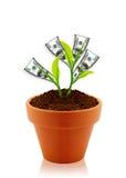 Pengartree fotografering för bildbyråer