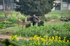 Penghzhou, China: Farmer with Garlic Greens Royalty Free Stock Photo