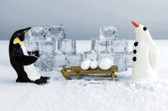 Penguin με τις χιονιές Στοκ Φωτογραφίες