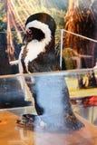 penguin μικρός Στοκ φωτογραφία με δικαίωμα ελεύθερης χρήσης