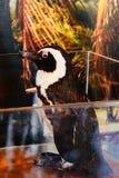 penguin μικρός Στοκ εικόνες με δικαίωμα ελεύθερης χρήσης