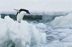 Penguin στο παγόβουνο Στοκ φωτογραφία με δικαίωμα ελεύθερης χρήσης