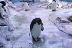 penguin stockfotos