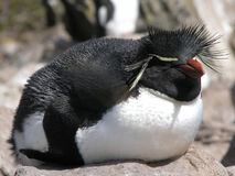 Free Penguin Stock Images - 1611954