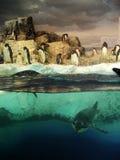 Penguin. S in tank of aquarium Royalty Free Stock Photography