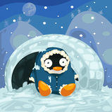 Penguin. Illustration of landscape cute penguin Royalty Free Stock Image