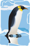 Penguin. A Beautiful Penguin walking on ice Stock Photo