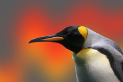 Penguin. With a modified background Stock Photography