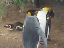 penguin Stockfoto
