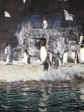 penguin Stockbild
