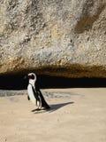 Penguin Στοκ εικόνα με δικαίωμα ελεύθερης χρήσης