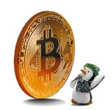 Penguin admiring gold bitcoin. Concept photo of a penguin looking admiringly up at a huge gold bitcoin royalty free stock photo