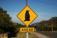Penguin ahead. Yellow Penguin Ahead warning roadsign in Australia Stock Photos