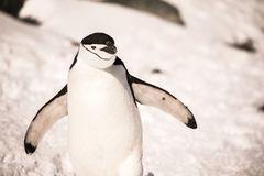 Penguin in Antarctica have a sunny morning stock photos