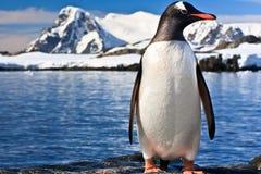 Penguin in Antarctica Stock Images