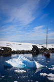 Penguin in Antarctica Stock Photo