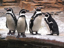 Penguin asks: why are you guys sleeping? Stock Photo