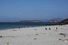 Penguin Beach - Falkland Islands Stock Photography
