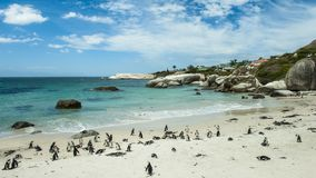 Penguin Beach, South Africa. Penguin Beach South Africa is located near Simonstown Town, about 20 kilometers from Cape Town. When it comes to penguins, people Stock Images