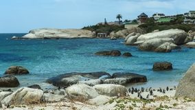 Penguin Beach, South Africa. Penguin Beach South Africa is located near Simonstown Town, about 20 kilometers from Cape Town. When it comes to penguins, people Royalty Free Stock Photo