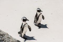 Penguin on beach. White sand sunny day Stock Photo