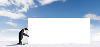 Penguin with Billboard. A penguin with a blank billboard stock photo