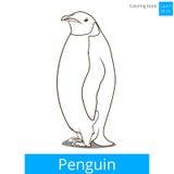 Penguin bird learn birds coloring book vector Stock Photography