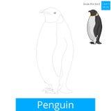 Penguin bird learn to draw vector Stock Photos