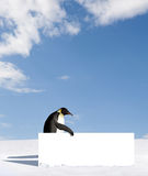Penguin with blank sign Royalty Free Stock Image
