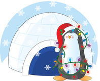 Penguin Christmas Royalty Free Stock Photos