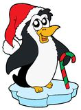Penguin in Christmas cap Stock Photography