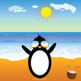 Penguin with coconut on the beach  Stock Image